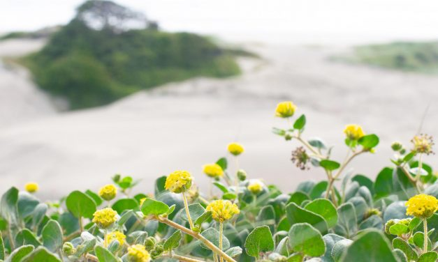 Explore the Amazing Sand Dunes in Pacific Rim National Park